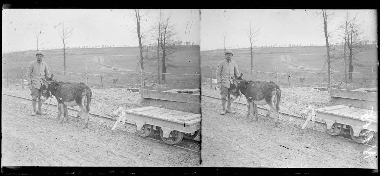 Minaucourt (Marne). Petits ânes attelés à des wagonnets. [légende d'origine]