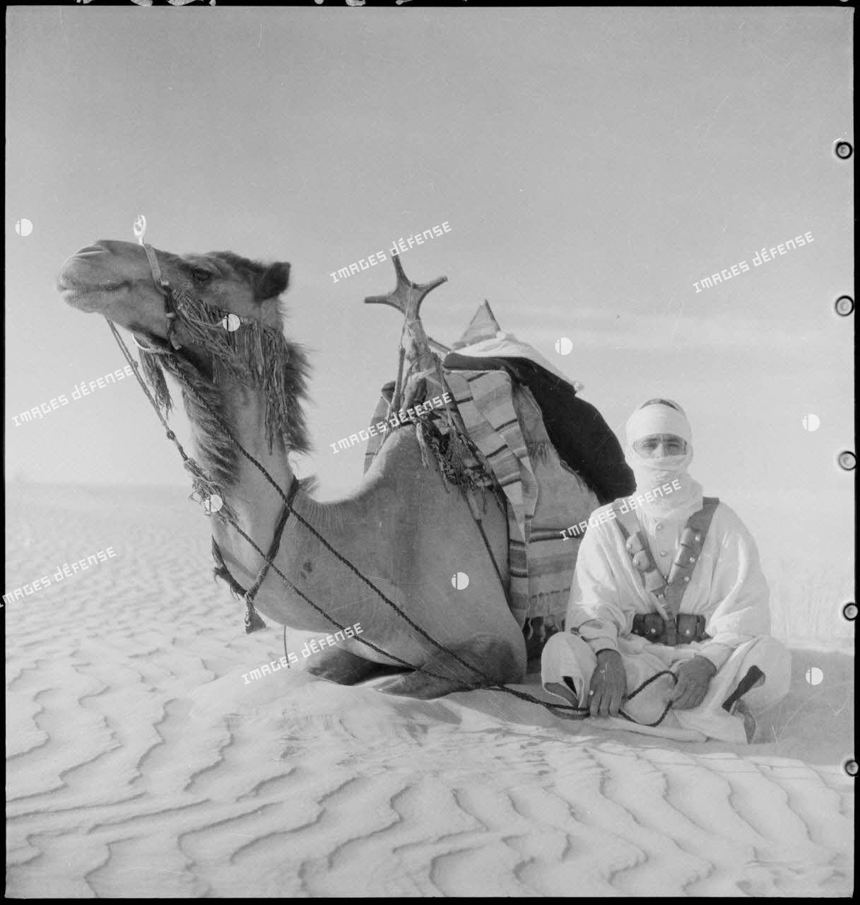 Méhariste et son dromadaire dans le désert.