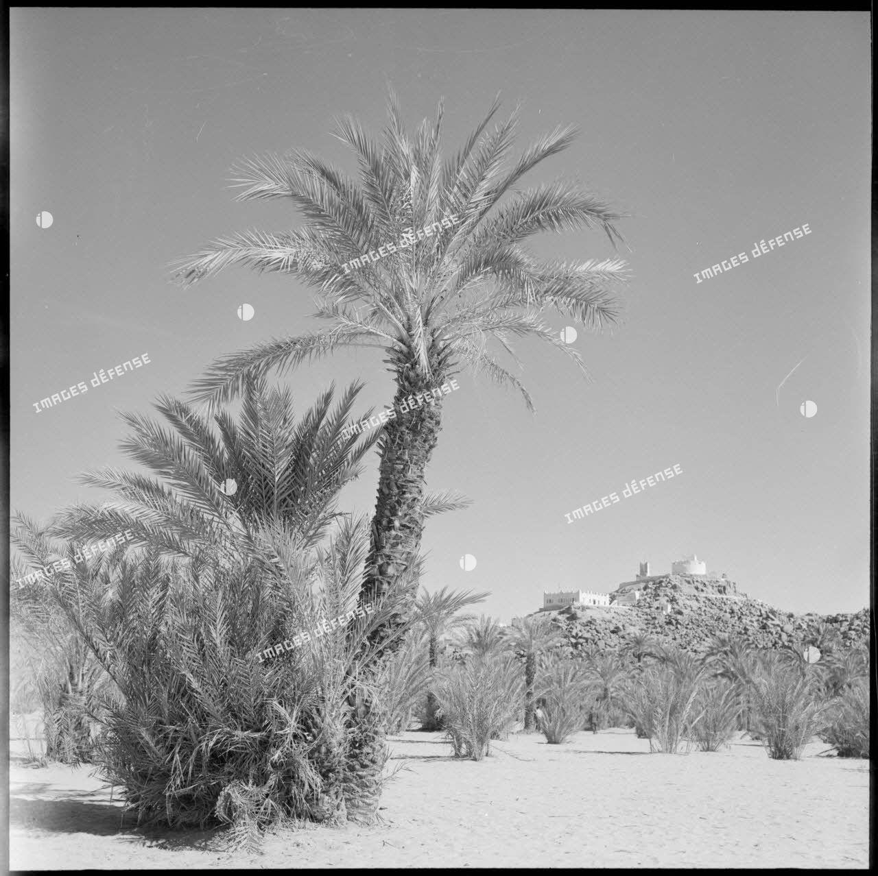 Une palmeraie à Djanet (Fort Charlet).