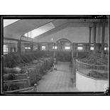 Garches, Seine-et-Oise, Institut Pasteur, fabrication des sérums. Ecurie circulaire. [légende d'origine]